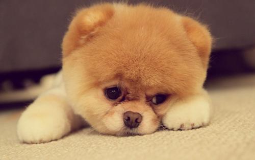 世界上最萌的小宠物