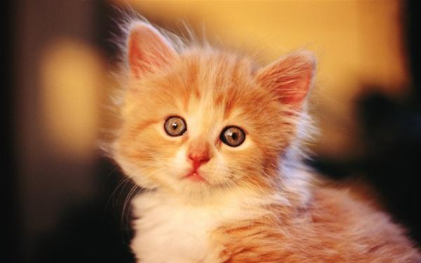 世界上最萌的小宠物 二